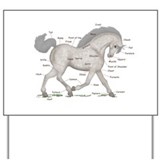 Gray Horse Anatomy Chart Yard Sign