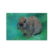 Unique Lop eared rabbit Rectangle Magnet