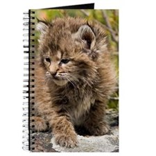Bobcat Kitten Journal