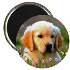 "Austin, Retriever Puppy 2.25"" Magnet (100 pack)"