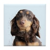 Long Hair Doxie Tile Coaster