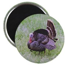 Male Turkey Magnet