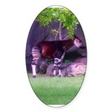 okapi 2 Oval Sticker (10 pk)