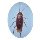 Urban Cockroach Oval Ornament