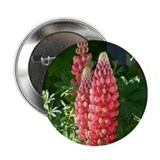 Red Lupine Button