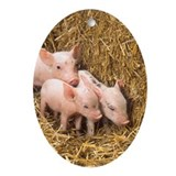Cute Piglet Oval Ornament
