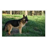 German Shepherd Rectangle Bumper Stickers
