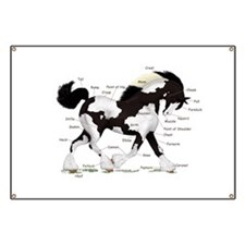 Black Gypsy Horse Anatomy Banner