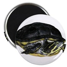 "Turtle 2.25"" Magnet (10 pack)"