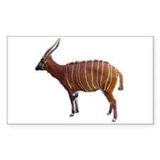 bongo cutout Rectangle Sticker 50 pk)