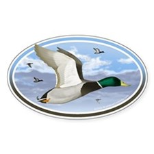 Mallard Ducks car bumper sticker decal (Oval)