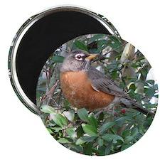 Robin Redbreast Magnet