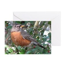 Robin Redbreast Greeting Cards (Pk of 20)