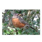 Robin Redbreast Postcards (Package of 8)