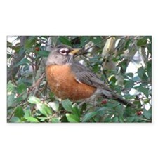 Robin Redbreast Rectangle Decal