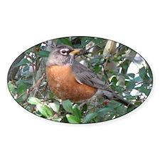 Robin Redbreast Oval Decal