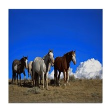 Horses under clear blue sky Tile Coaster