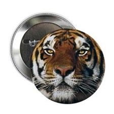 "Bengal 2.25"" Button (100 pack)"