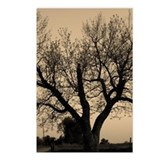 Tree by Orange Glow Post Cards (8 Pack)