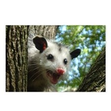 Possum Postcards (Package of 8)