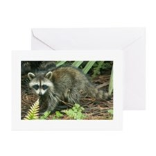 Raccoon Greeting Cards (Pk of 10)