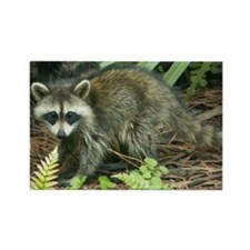 Raccoon Magnet (10 pack)