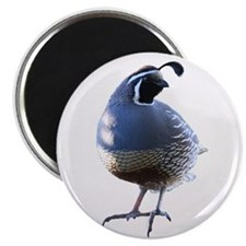 Evening Quail Magnet