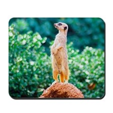 Meerly a Meerkat Mousepad