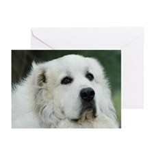 Unique Large Greeting Cards (Pk of 20)