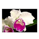 Cattleya warszcewiczii Postcards (Package of 8)