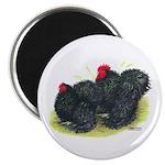 "Black Frizzle Cochins2 2.25"" Magnet (100 pack"