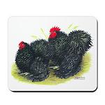 Black Frizzle Cochins2 Mousepad