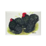 Black Frizzle Cochins2 Rectangle Magnet (10 pack)