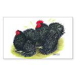 Black Frizzle Cochins2 Rectangle Sticker