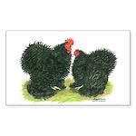 Black Frizzle Cochins Rectangle Sticker 50 pk)
