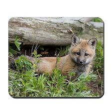 Red Fox Kit Mousepad
