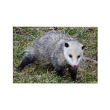 Opossum Rectangle Magnet