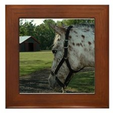 Appaloosa Horse Framed Tile