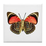 Cute Butterfly photograph Tile Coaster