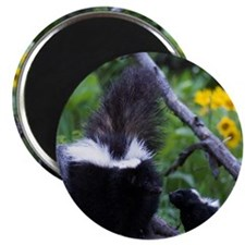 "Skunk 2.25"" Magnet (10 pack)"