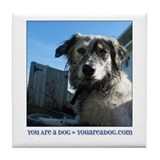 Border Collie Sadie Tile Coaster