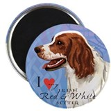 Irish Red &amp; White Setter Magnet