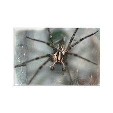 Funnel Web Spider Rectangle Magnet