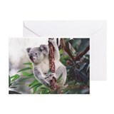 Koala Greeting Cards 2 (Pk of 10)