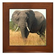 Elephant in Grass Framed Tile