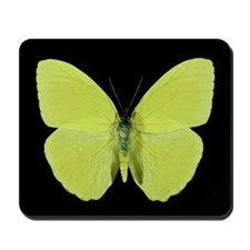 Phoebis Butterfly Mousepad