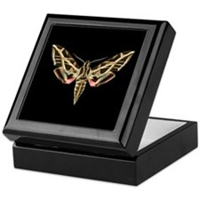 Vitis Sphinx Moth Keepsake Box