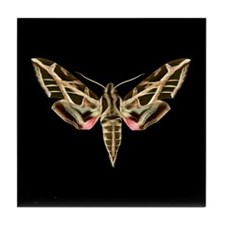 Vitis Sphinx Moth Tile Coaster