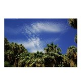 Palms and Sky Postcards (Package of 8)
