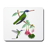 Mousepad Violet-crowned Hummingbird